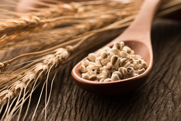 organic millet seeds in a wooden spoon closeup