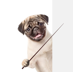 Dog holding a pointing stick and points on empty banner. isolated on white background