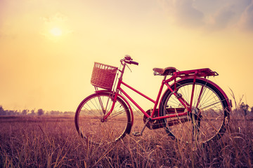 Garden Poster Bicycle beautiful landscape image with Bicycle at sunset in vintage tone style