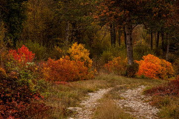 Picturesque Autumn with red and yellow lives