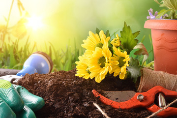 Gardening tools for trees plants and flowers green background outside
