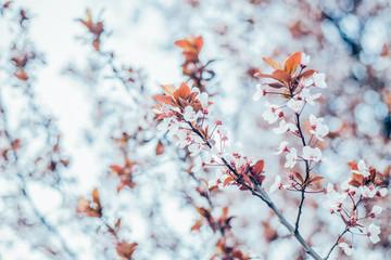 Heralding the start of spring