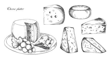Cheese platter, vector illustration