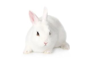 White fluffy Bunny