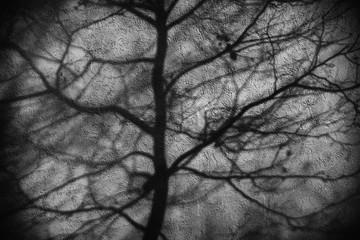 Fototapeta Schatten von Zweigen  / Die abstrakten  Schatten von Zweigen auf einer verputzten Fassade.