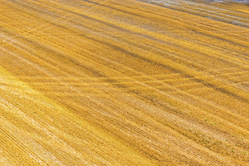 yellow harvested field