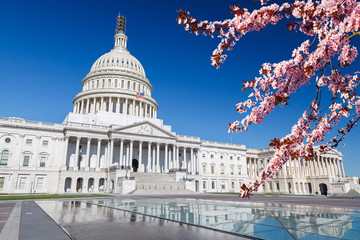 US Capitol over blue sky with blooming cherry on foregraund Wall mural