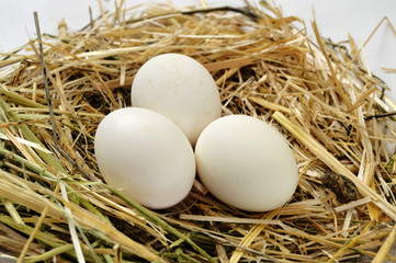 pictures of the chicken eggs in the most beautiful white ground, Herbs and plants in the chicken eggs, chicken nest and eggs,