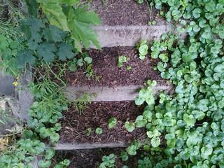 überwucherte Steintreppe