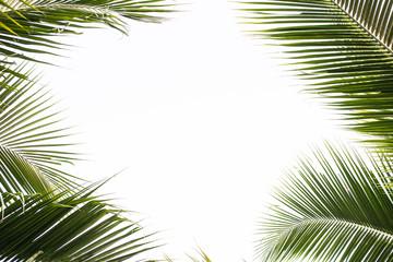 coconut leaf in spring summer season