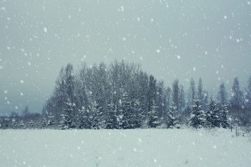 Beautiful winter landscape with forest and snowfall