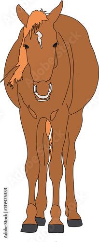"""garub desert wild horse standing front view - digital ..."