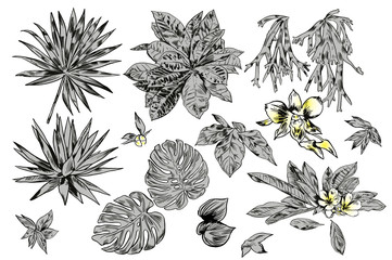Exotic flowers set. Botanical  vintage illustration.