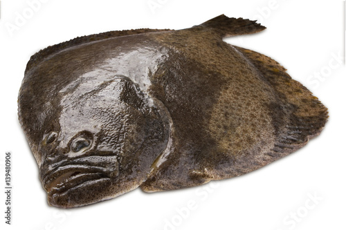 Turbot fish stock photo and royalty free images on for Turbot fish price