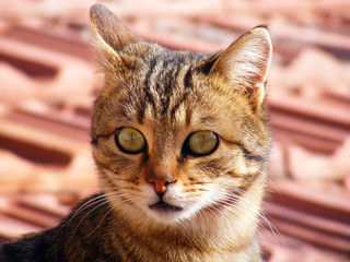 Cat pictures, cat eyes, the most beautiful cat eye photos, cute cat, innocent look pets
