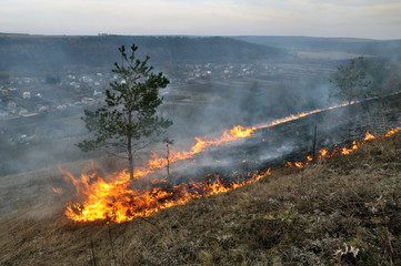 The real environmental disaster and spring is not arson dry cut grass that grew around settlements