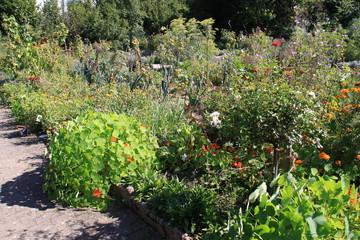 Bauerngarten mit Kapuzinerkresse
