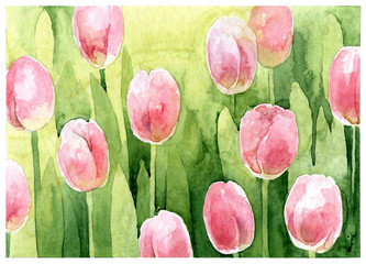 Watercolor pink tulips