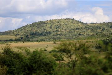 Afrykańska sawanna w parku narodowym Pilanesberg