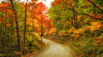 Kistler dirt road in the Linville Wilderness Gorge during Autumn Wall mural