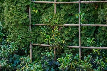 Green vegetation growing through a trellis