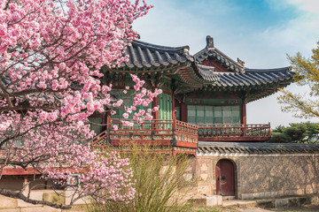 Spring Cherry Blossom at Changdeokgung Palace, Seoul, South Korea