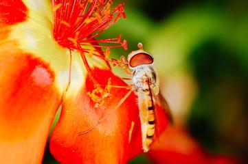 Little beautiful bee nb.8