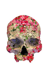 Skull with Roses in double exposure isolated on white background.