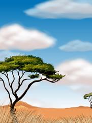 Scene with tree in the desert field