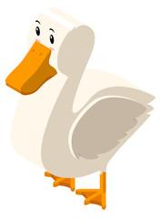 3D design for white duck