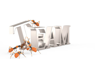 Teamwork cooperation and collaboration ants building steel text team.3D illustration.
