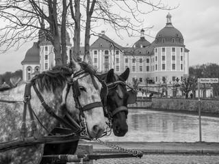 Schwarzweißfotografie Pferde am Schloss Moritzburg