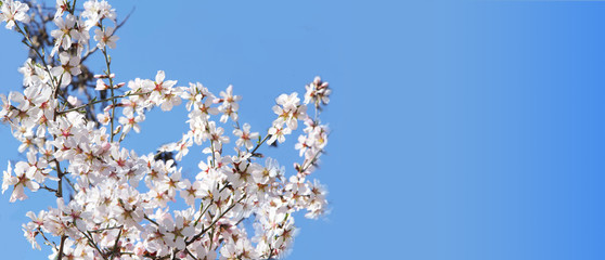 Spring blossoms, flowers. nature background
