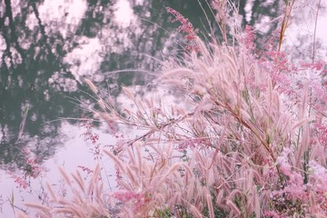 grasses  flower with river