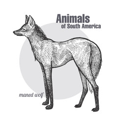 Maned Wolf hand drawing. Animals of South America series. Vintage engraving style. Vector illustration art. Black and white. Object of nature naturalistic sketch.