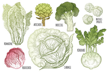 Various types of cabbage color graphics.