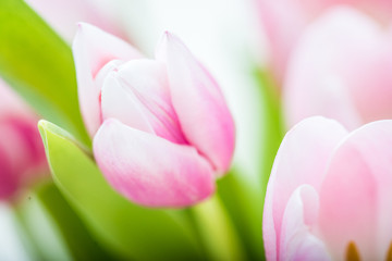 Bouquet of pink tulips on a light background. Holiday card.