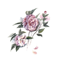 Watercolor hand painted illustration with piones isolated on white background in gentle tone. Floral birthday card.