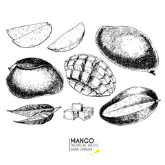 Vector hand drawn set of exotic fruits. Ioslated mango. Engraved art. Delicicous tropical vegetarian objects.