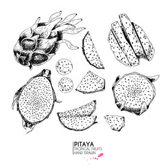 Vector hand drawn set of exotic fruits. Ioslated pitaya. Engraved art. Delicicous tropical vegetarian objects.