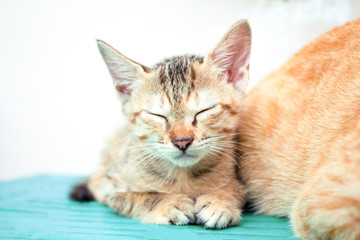 Sleeping kitten on wooden bench. Young cat on wooden background.