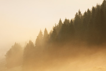Sunlight on Forest  with fog