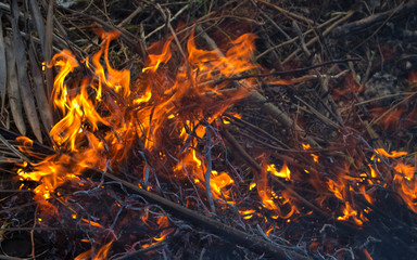 Forest fire close up photo. Burning wood and tree branches.