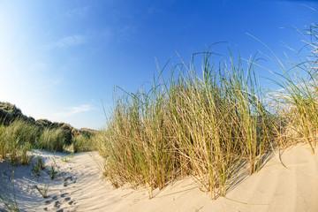 Wall Mural - Sommerliche Dünenlandschaft auf norddeutscher Insel mit Sonnenstrahlen