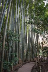 Bamboo forest at Hokokuji temple, Kamakura, Kanagawa, Japan