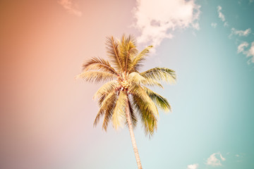 coconut tree under cloud and blue sky, vintage tone