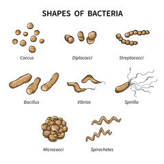 Poster shapes of bacteria on white background. Vector illustration