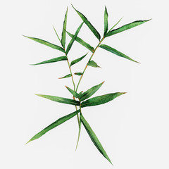 Watercolor Bamboo leaves isolated on white background. Watercolor hand painted illustration.
