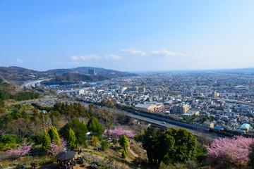 神奈川 松田山 河津桜と足柄平野の町並み