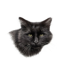 Black Cat Face isolated on the white background. Realistic drawing of a cat with green eyes. Good for print T-shirt. Animal collection. Hand painted illustration. Art background, cover for pet shop.